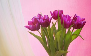 Картинка фон, букет, тюльпаны, Алексей Назаров