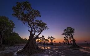 Картинка деревья, вечер, отлив, Индонезия, зарево, Walakiri Beach