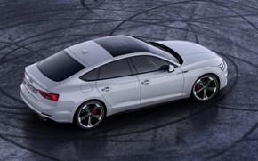 Картинка Audi, Audi A5, спортбэк, 2019, S5 Sportback
