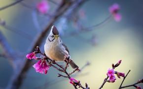 Картинка птица, ветка, тайваньская юхина
