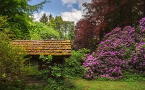 Картинка зелень, небо, солнце, облака, деревья, цветы, Германия, сад, домик, кусты, рододендроны, Castle Park, Seyfriedsberg