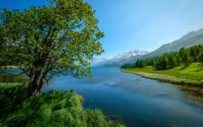 Картинка трава, пейзаж, горы, природа, озеро, дерево, Швейцария, леса, берега