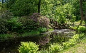 Картинка зелень, трава, солнце, деревья, цветы, пруд, парк, камни, Германия, кусты, Wiesenburg Castle Park