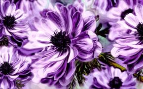 Картинка Grafika, Kwiat, Zawilec