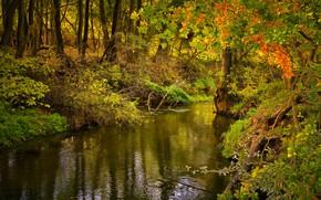 Картинка лес, деревья, речка