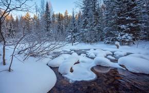 Картинка зима, лес, снег, деревья, река, Евдокимов Сергей