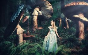 Картинка девушка, гусеница, грибы, фэнтези, Алиса в стране чедес, фотоарт