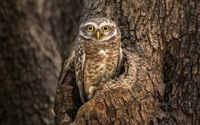 Картинка природа, дерево, сова, птица, боке