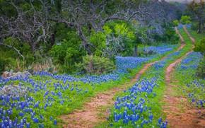 Картинка дорога, цветы, весна, США, Техас, парк штата, техасский люпин, Инкс Лейк