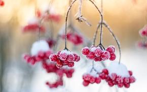 Картинка зима, иней, утро, Калина