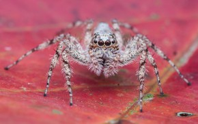 Картинка макро, лист, фон, паук, насекомое