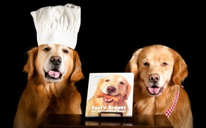Картинка язык, собаки, морда, стол, две, собака, пара, повар, книга, образ, черный фон, двое, парочка, фотосессия, …