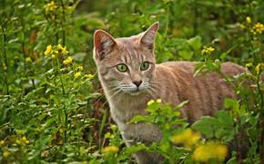 Картинка кошка, цветы, природа