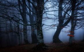 Картинка осень, лес, ветки, туман, полумрак, сумерки