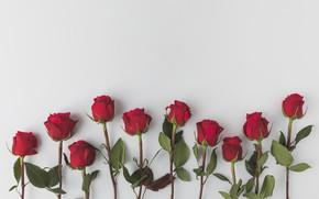 Картинка фон, Розы, бутоны, ЦВЕТЫ