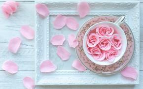 Картинка роза, рамка, лепестки