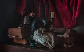 Картинка книги, череп, рога, натюрморт, штора