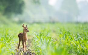 Картинка природа, олень, малыш