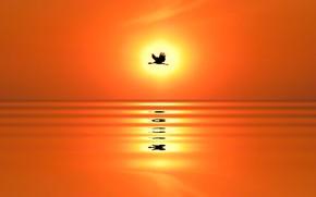 Картинка море, солнце, закат, отражение, птица, силуэт, журавль