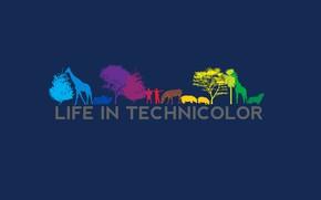 Картинка фильм, силуэт, life in technicolor, жизнь в красках