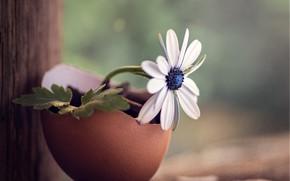Картинка цветок, макро, скорлупа, деревяшки