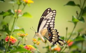 Картинка цветы, бабочка, крылья