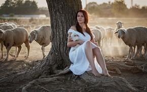 Картинка девушка, овцы, стадо, ягнёнок, Goran Dobožanov
