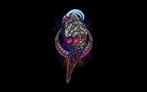 Картинка Месяц, Фон, Стиль, Арт, Попугай, Hastaning Bagus Penggalih, by Hastaning Bagus Penggalih, Background, Цвет, Минимализм, …