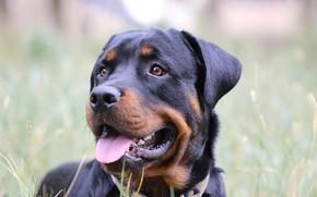 Картинка морда, друг, собака