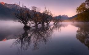 Картинка деревья, река, утро