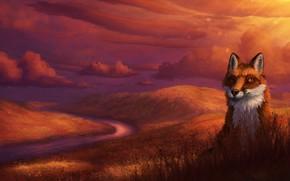 Картинка природа, холмы, лиса, by CreeperMan0508