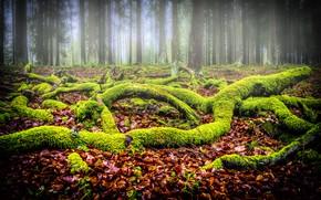 Картинка лес, листва, мох, коряги