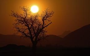 Картинка солнце, закат, дерево, силуэт