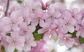 Картинка макро, розовый, весна, цветение