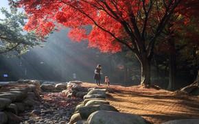 Картинка осень, свет, деревья, пейзаж, природа, парк, камни, девочка, собачка, ребёнок, Южная Корея