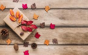 Картинка осенние, фон, шишки, leaves, autumn, листья, дерево, wood, colorful, background, осень, maple