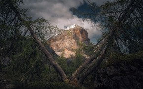 Картинка лес, деревья, природа, гора