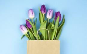 Картинка цветы, фиолетовые, тюльпаны, flowers, beautiful, голубой фон, tulips, spring, purple