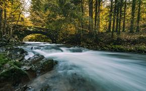 Картинка осень, лес, мост, река