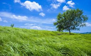 Картинка зелень, поле, лето, небо, трава, облака, синева, дерево, склон, луг