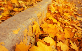 Обои осень, листья, фон, желтые, colorful, клен, yellow, background, autumn, leaves, осенние, maple