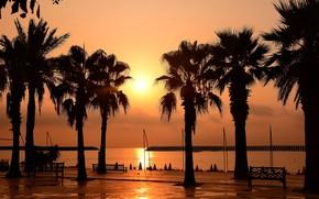 Картинка солнце, пальмы, рассвет