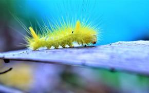 Картинка гусеница, фон, волоски