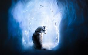 Картинка лёд, собака, Хаски, ледяная пещера