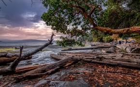 Картинка море, лес, небо, листья, деревья, тучи, побережье, Канада, коряги, Nanaimo