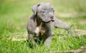 Картинка природа, собака, щенок