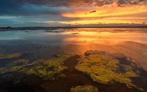 Картинка зелень, небо, вода, облака, свет, водоросли, закат, отражение, река, берег, вечер, горизонт, водоем, ряска