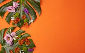 Обои листья, цветы, хризантема, эустома