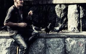 Картинка птицы, Камень, голуби, Фотограф