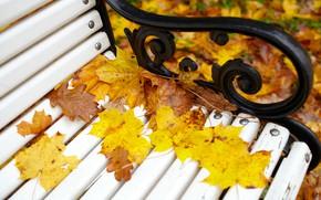 Картинка осень, листья, скамейка, парк, colorful, клен, park, autumn, leaves, bench, fall, maple